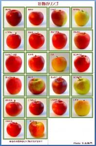 リンゴオールスターキャスト