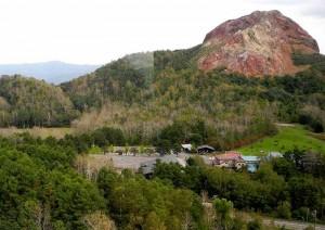 昭和新山のドロノキ