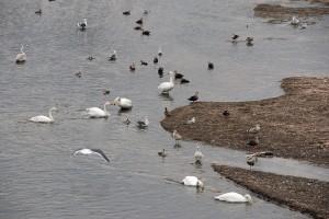 河口の鳥たち