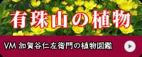 加賀谷仁左衛門の植物図鑑