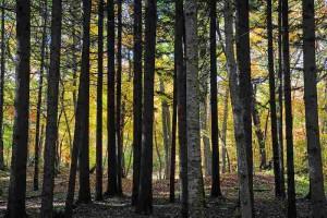 樹林の向こう