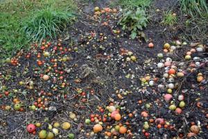 大地のトマト