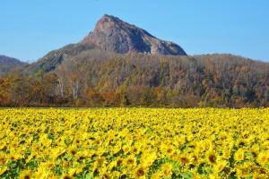 昭和新山の秋