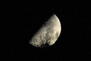半月とドロノキ