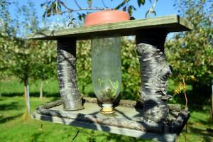 ヒマワリの種子が発芽